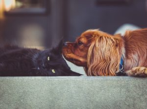 A cat and a dog laying next to each other.